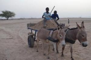 AVEC LA VENTE DU PACK SOLIDARITÉ, les enfants de l'éco-école des Bosquets ont réuni la somme nécessaire à la construction d'une cuisine en dur !!! Les enfants de l'école de Fayako vont chercher le sable dans l'île.